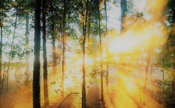 Loš noćni vid: aureole i bljeskovi