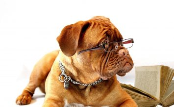 Kakve naočale odgovaraju vašem licu? Provjerite!