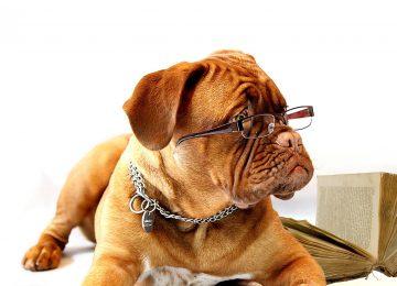 Veliki vodič pri odabiru savršenih naočala