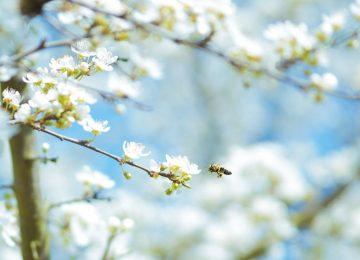 3 pravila koja će poboljšati vaš život – počnite odmah sada u proljeće!