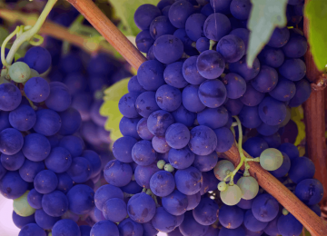 Mrkve? Ne, grožđe je odlično za vaše oči!