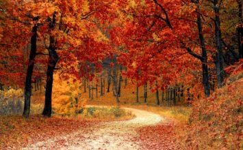 Zdrave oči ove jeseni!